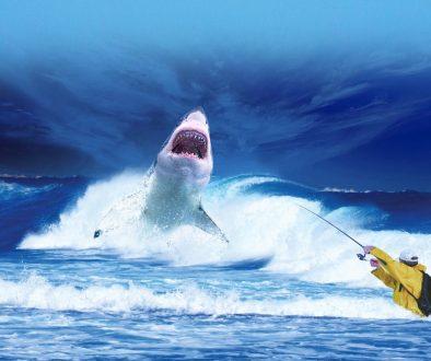 Renewable Energy Feature - Shark